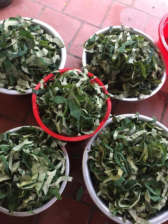 Loại lá mọc tràn ao bùn Việt Nam, 400 ngàn/kg, chị em ưa dùng để giữ eo - Ảnh 2.