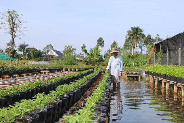 Nông dân đang oằn mình cứu cây ăn trái và hoa kiểng trước triều cường lịch sử - Ảnh 2.