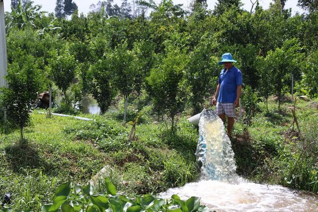 Nông dân đang oằn mình cứu cây ăn trái và hoa kiểng trước triều cường lịch sử - Ảnh 4.