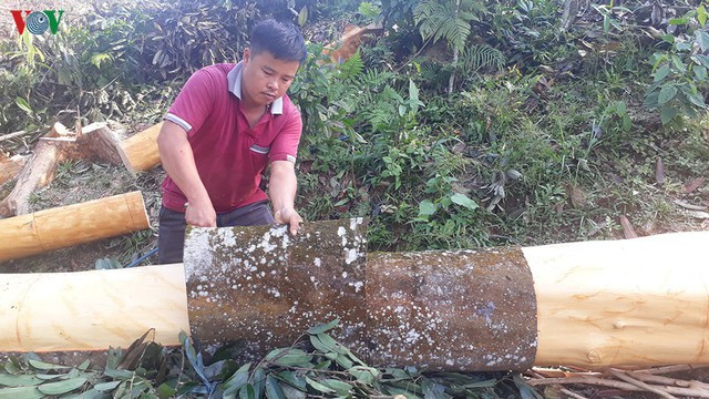 Hình ảnh: Người dân Yên Bái thu nhập hàng trăm tỷ đồng từ Quế - Ảnh 10.