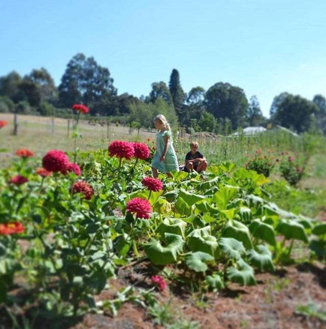 Gia đình 5 người quyết tâm không trở lại thành phố vì quá yêu thích cuộc sống nhà vườn ở nông thôn - Ảnh 8.