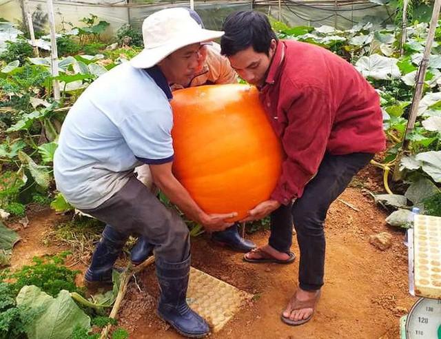 Ngắm bí ngô khổng lồ ở Đà Lạt sẵn sàng cho lễ Halloween - Ảnh 5.