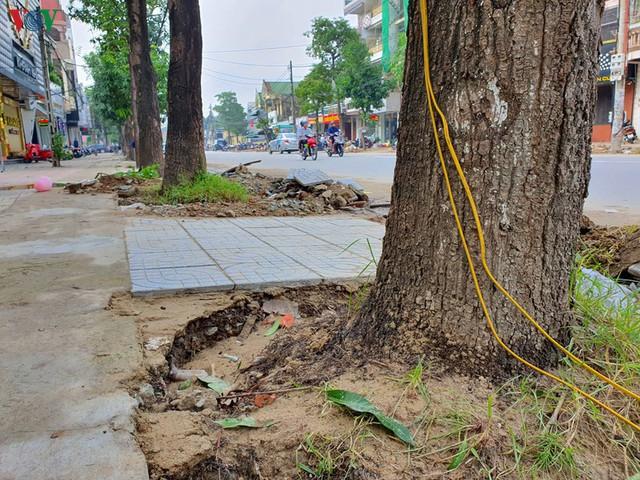 Ảnh: Dân tiếc nuối nhìn hàng cây cổ thụ hàng chục năm tuổi bị di dời - Ảnh 6.
