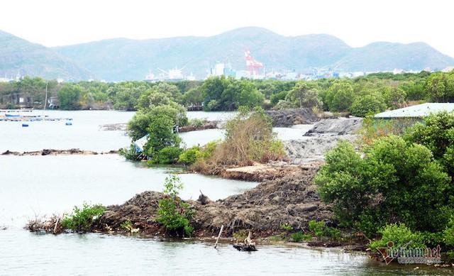 Thu hồi quyết định giao đất dự án nghìn tỷ ở đầm Thị Nại - Ảnh 1.