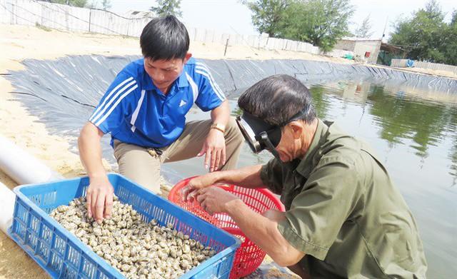Nuôi ốc hương thu tiền tỷ trên xứ gió Lào, cát trắng - Ảnh 6.
