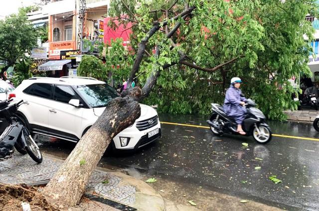 Đà Nẵng: Hàng loạt cây xanh ngã chắn đường, giao thông hỗn loạ - Ảnh 1.  Đà Nẵng: Hàng loạt cây xanh ngã chắn đường, giao thông hỗn loạ photo 1 1572494101338591894871