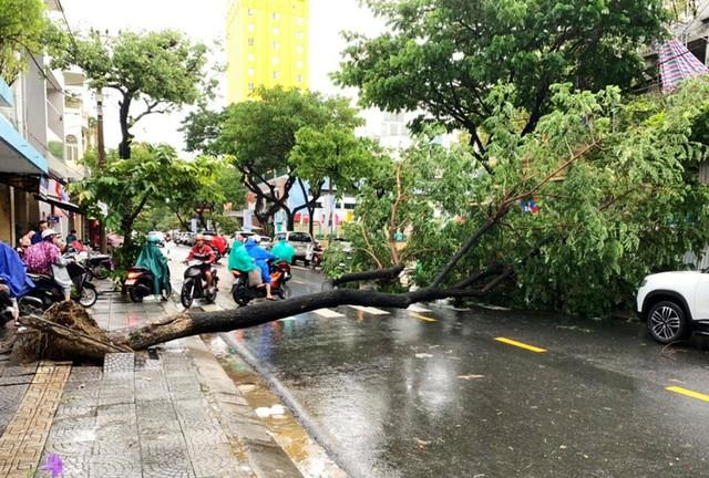Đà Nẵng: Hàng loạt cây xanh ngã chắn đường, giao thông hỗn loạ - Ảnh 2.  Đà Nẵng: Hàng loạt cây xanh ngã chắn đường, giao thông hỗn loạ photo 1 15724941097042141054732