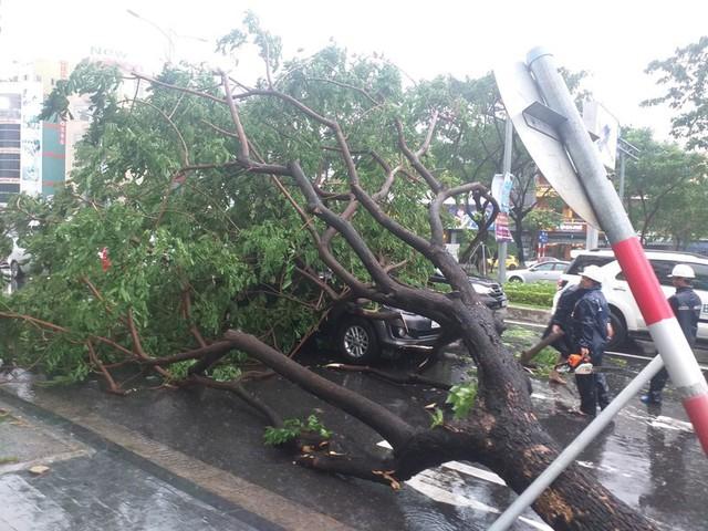Đà Nẵng: Hàng loạt cây xanh ngã chắn đường, giao thông hỗn loạ - Ảnh 4.  Đà Nẵng: Hàng loạt cây xanh ngã chắn đường, giao thông hỗn loạ photo 3 15724941097051969224773