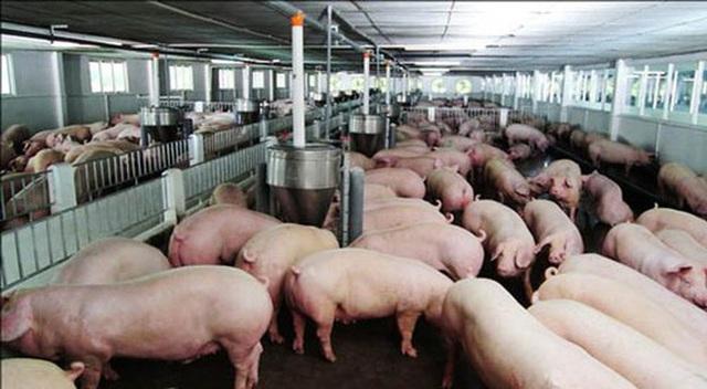 Thịt lợn tăng chưa từng có, do chính dân nuôi thổi giá - Ảnh 1.
