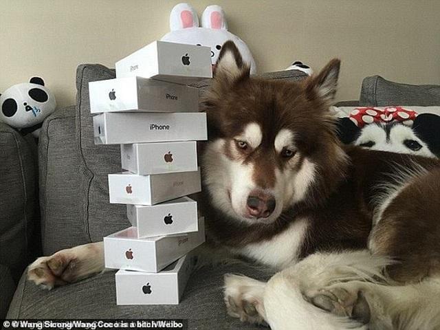 Từng chơi ngông mua 8 chiếc iPhone cho thú cưng, giờ cậu ấm nhà tỷ phú rơi vào cảnh bị cấm khỏi dịch vụ cao cấp vì... không chịu trả nợ - Ảnh 3.