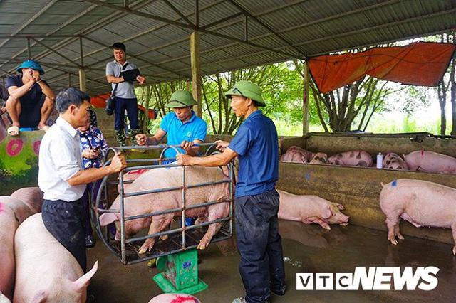 Giá lợn hơi lập đỉnh 78.000 đồng/kg, giá bán lẻ đắt kỷ lục 150.000 đồng/kg - Ảnh 2.