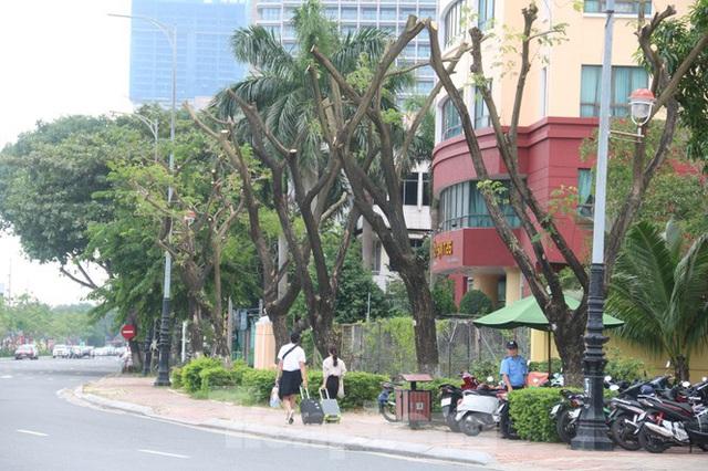 Hàng trăm cây xanh ở Đà Nẵng bất ngờ bị cắt trụi cành - Ảnh 1.