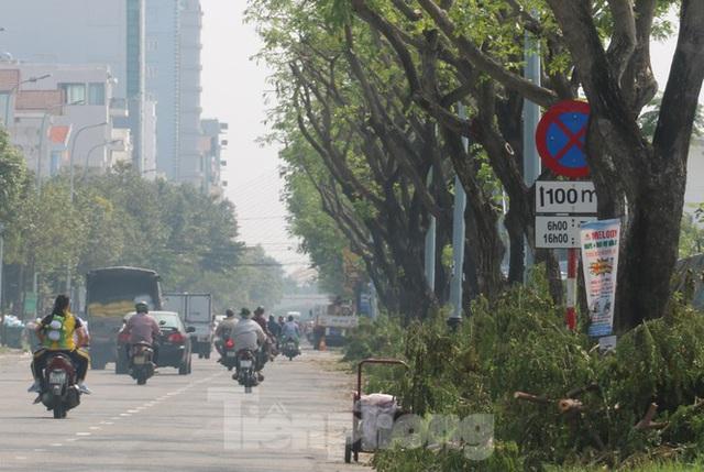 Hàng trăm cây xanh ở Đà Nẵng bất ngờ bị cắt trụi cành - Ảnh 11.
