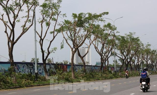 Hàng trăm cây xanh ở Đà Nẵng bất ngờ bị cắt trụi cành - Ảnh 5.