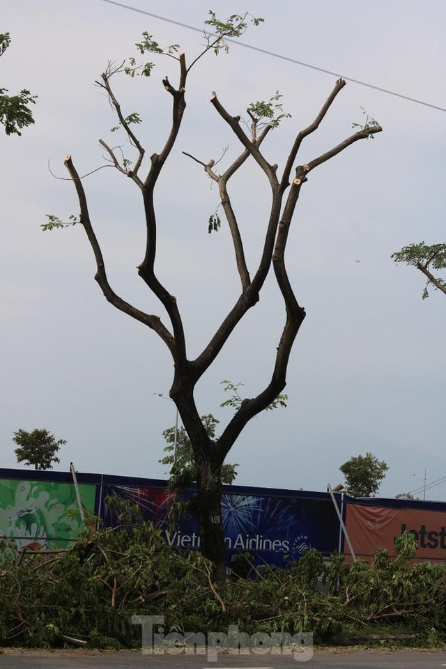 Hàng trăm cây xanh ở Đà Nẵng bất ngờ bị cắt trụi cành - Ảnh 6.