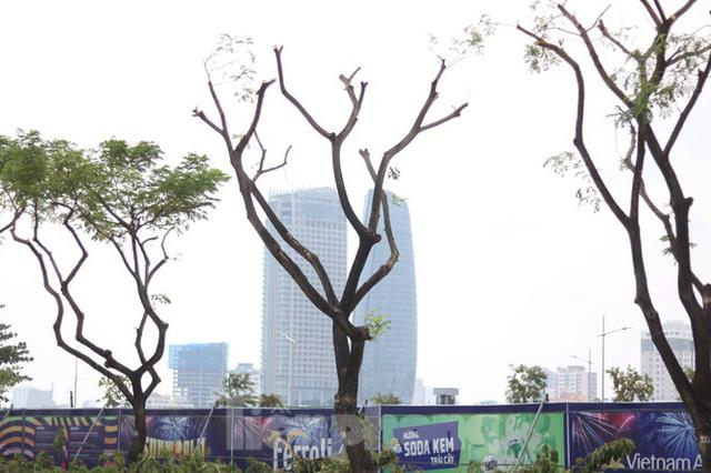 Hàng trăm cây xanh ở Đà Nẵng bất ngờ bị cắt trụi cành - Ảnh 7.