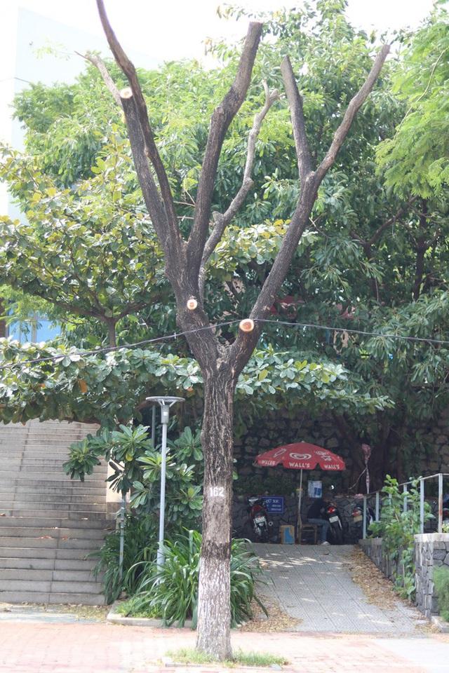 Hàng trăm cây xanh ở Đà Nẵng bất ngờ bị cắt trụi cành - Ảnh 8.