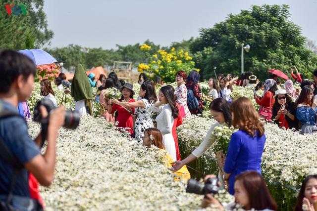 Cúc hoạ mi hút khách đến vườn hoa Nhật Tân  - Ảnh 2.