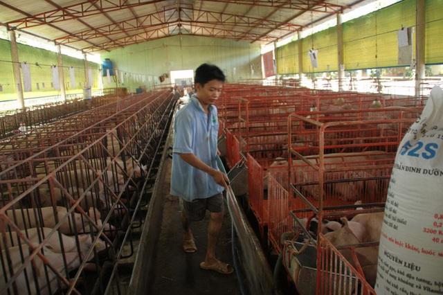 Giữa cơn sốt, lo heo lậu từ Thái Lan tuồn vào Việt Nam  - Ảnh 1.