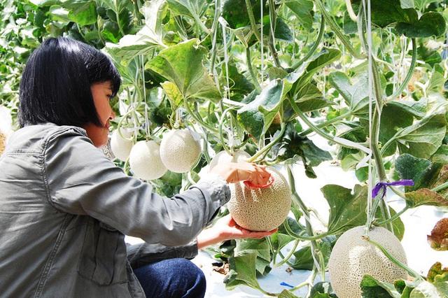 Câu chuyện đằng sau những trái dưa tiền tỉ của Nhật Bản: Căn nguyên từ tình yêu bất diệt của người trồng cây - Ảnh 9.