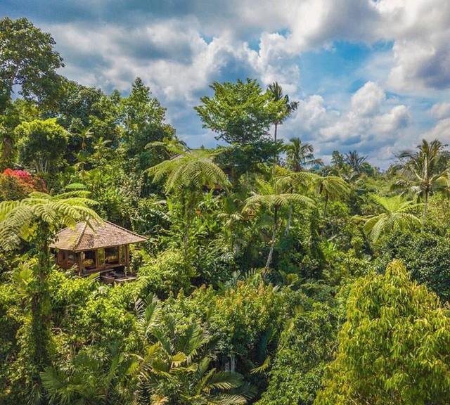 Câu chuyện ngỡ như cổ tích của gia đình sống 20 năm trong rừng nhờ trồng rau quả sạch - Ảnh 2.
