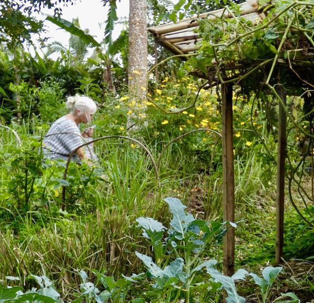 Câu chuyện ngỡ như cổ tích của gia đình sống 20 năm trong rừng nhờ trồng rau quả sạch - Ảnh 11.