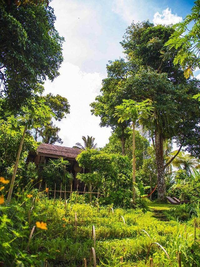 Câu chuyện ngỡ như cổ tích của gia đình sống 20 năm trong rừng nhờ trồng rau quả sạch - Ảnh 5.