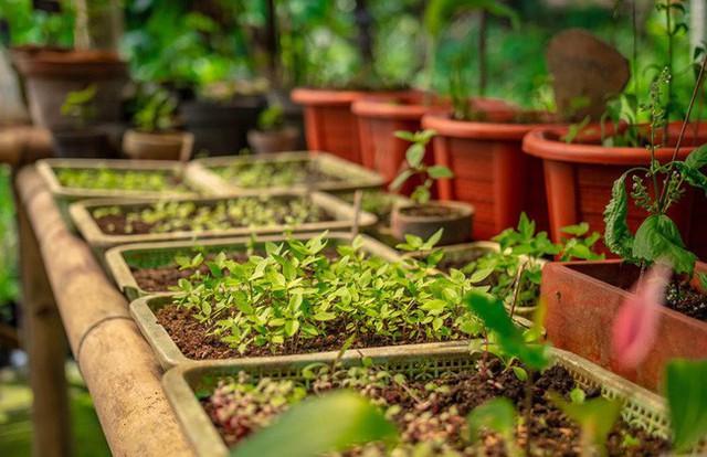 Câu chuyện ngỡ như cổ tích của gia đình sống 20 năm trong rừng nhờ trồng rau quả sạch - Ảnh 8.