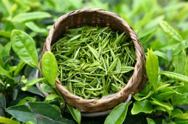 Mỗi ngày nên uống bao nhiêu trà xanh để có tác dụng tốt nhất cho sức khỏe: Tiết lộ bất ngờ  - Ảnh 2.