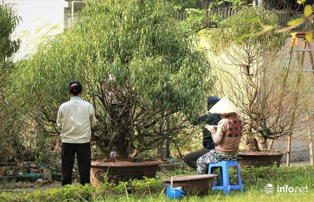 Đào Nhật Tân xuống phố sớm, nhiều tuyến đường Hà Nội đã rộn ràng sắc Xuân - Ảnh 1.