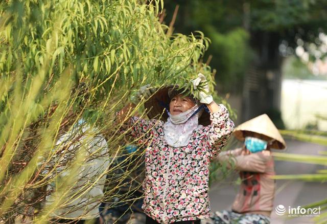Đào Nhật Tân xuống phố sớm, nhiều tuyến đường Hà Nội đã rộn ràng sắc Xuân - Ảnh 4.