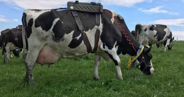Khi sữa chay ngày càng được ưa chuộng: Quả bom nổ chậm cho ngành sữa truyền thống? - Ảnh 10.