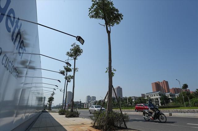 Cận cảnh hàng cây hoa sữa đang độ nở trên con đường mới mở của Thủ đô - Ảnh 2.