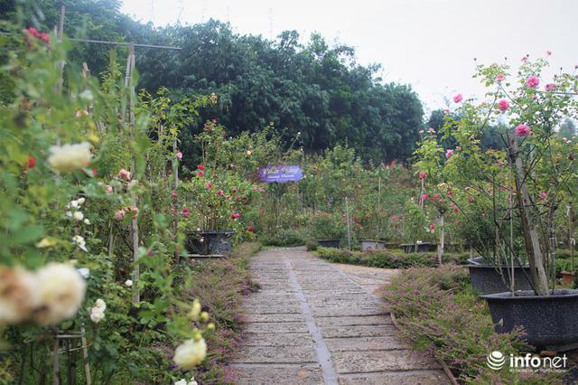 Chàng thanh niên 30 tuổi trồng trại hoa hồng thu hàng trăm triệu mỗi năm - Ảnh 1.