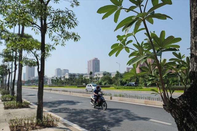 Cận cảnh hàng cây hoa sữa đang độ nở trên con đường mới mở của Thủ đô - Ảnh 3.