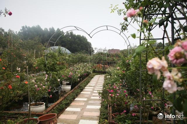 Chàng thanh niên 30 tuổi trồng trại hoa hồng thu hàng trăm triệu mỗi năm - Ảnh 4.