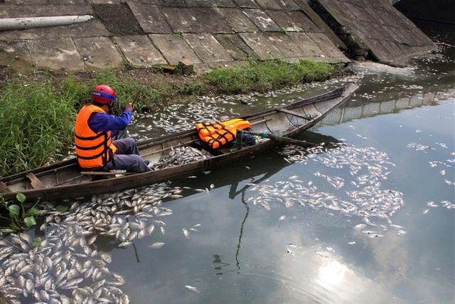 Cá chết nổi trắng hồ điều hòa giữa trung tâm TP Đông Hà  - Ảnh 2.