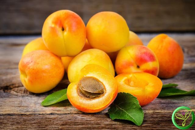 """Loại quả màu vàng nhiều người chê """"chua loét"""" hóa ra dùng để trị ho hay viêm họng, đau răng lại cực nhanh và tiện - Ảnh 4."""
