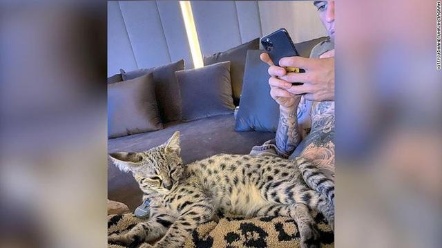 Trang Hà - Cô gái mang những chú mèo trị giá hàng tỷ đồng về Việt Nam và tiết lộ trào lưu nuôi thú cưng mới của giới đại gia và siêu giàu tại Sài Gòn - Ảnh 1.
