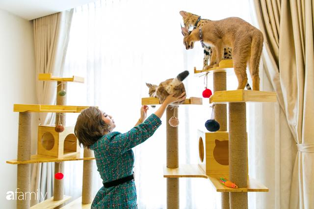 Trang Hà - Cô gái mang những chú mèo trị giá hàng tỷ đồng về Việt Nam và tiết lộ trào lưu nuôi thú cưng mới của giới đại gia và siêu giàu tại Sài Gòn - Ảnh 23.