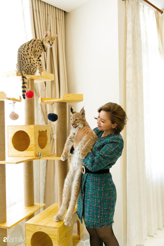 Trang Hà - Cô gái mang những chú mèo trị giá hàng tỷ đồng về Việt Nam và tiết lộ trào lưu nuôi thú cưng mới của giới đại gia và siêu giàu tại Sài Gòn - Ảnh 28.