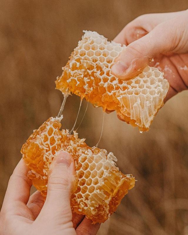 Có gì bên trong loại mật ong đắt tiền nhất thế giới khiến dân tình sẵn sàng chi tới nghìn đô để mua cho bằng được? - Ảnh 1.