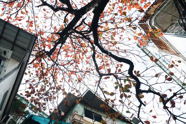 Mùa đông Hà Nội có hương vị gì khiến người ta phải lòng đến thế, năm nào cũng đến mà vẫn khắc khoải ngóng trông - Ảnh 12.