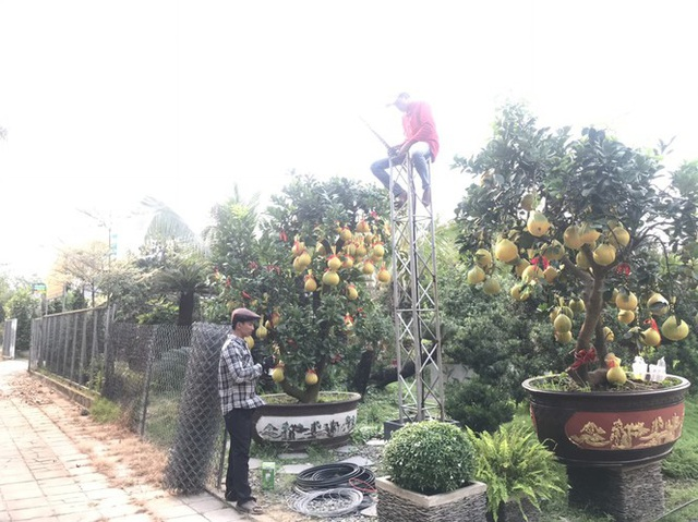 Bưởi Diễn giá trăm triệu đồng đổ bộ Sài Gòn - Ảnh 3.