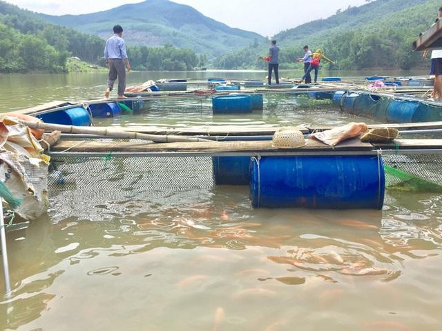 Nuôi cá lòng hồ thủy điện ở Quảng Ngãi cho hiệu quả kinh tế cao - Ảnh 2.