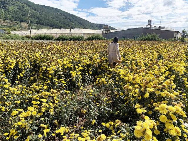 Vì sao Đà Lạt chỉ xuất khẩu được 10% sản lượng hoa? - Ảnh 1.