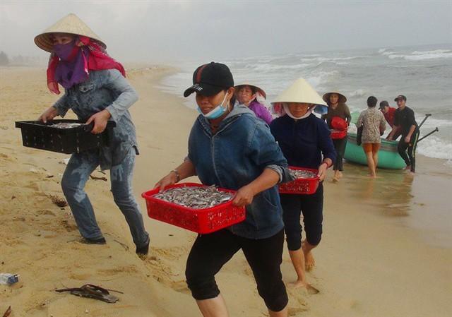 Ngư dân Quảng Bình cười tươi hơn tết nhờ trúng mùa, trúng giá cá trích - Ảnh 2.