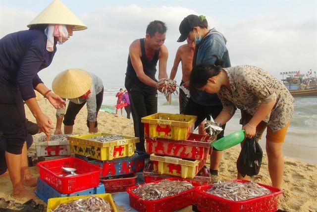 Ngư dân Quảng Bình cười tươi hơn tết nhờ trúng mùa, trúng giá cá trích - Ảnh 4.