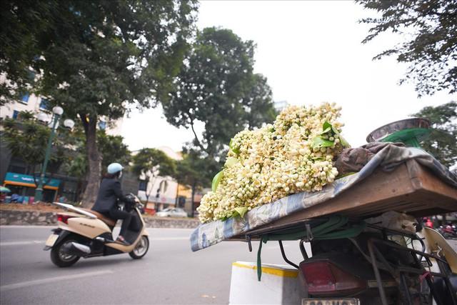Đất Hà Thành thơm lừng mùa hoa bưởi - Ảnh 6.