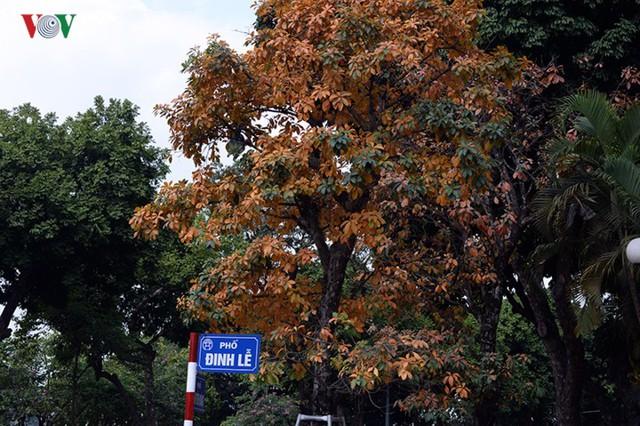 Ngỡ ngàng vẻ đẹp Hồ Gươm như mùa thu châu Âu - Ảnh 8.